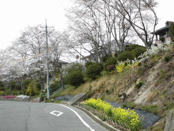 H26.4.3桜ドライブ①.JPG